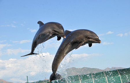 A view from Marmaris Meet Dolphins