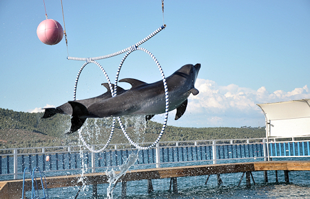 A view from Bodrum Dolphin and Seal Show in Bodrum