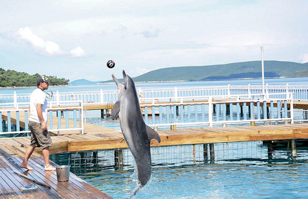 A view from Bodrum Dolphin and Seal Show